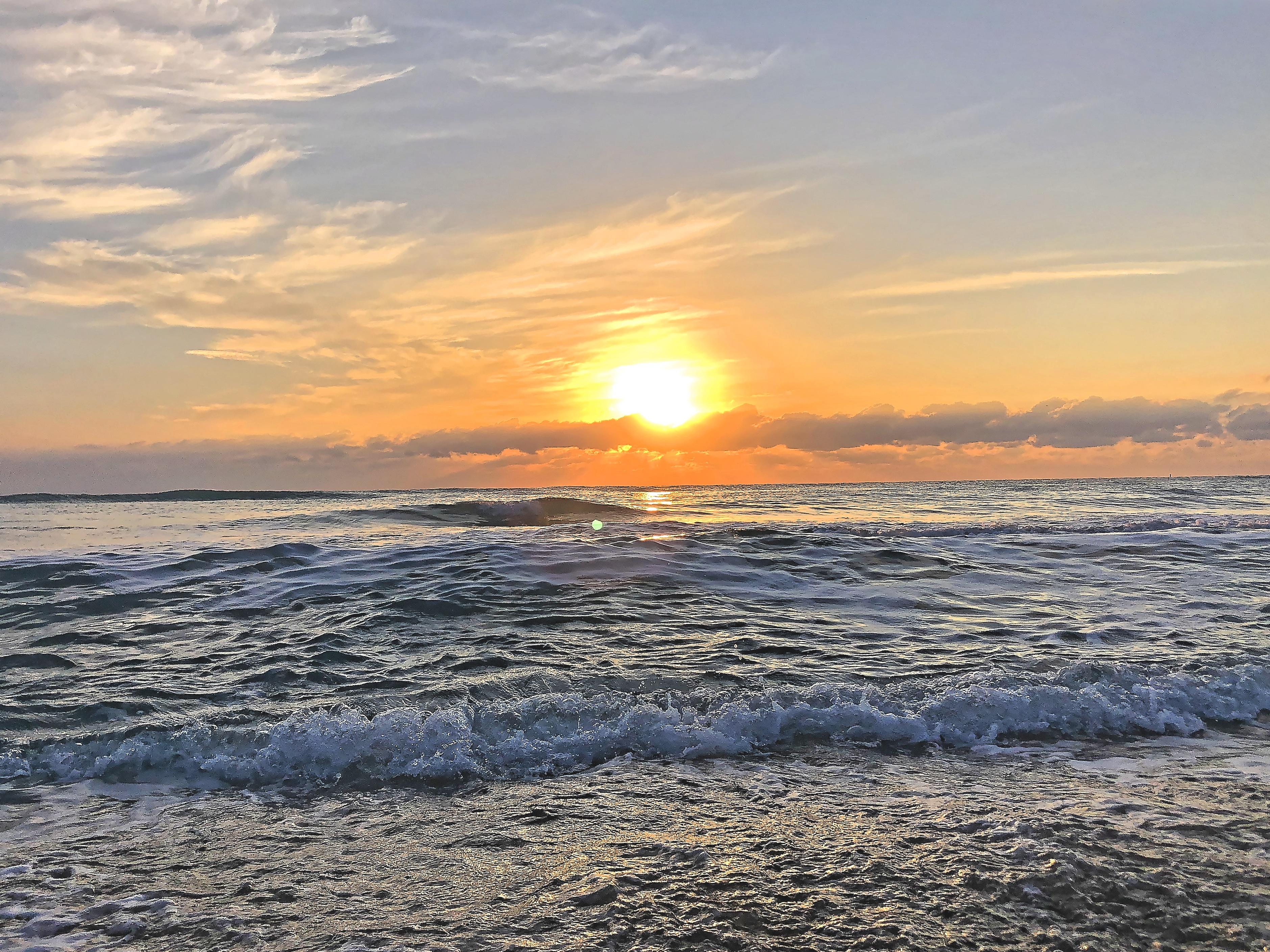 bird flying on the beach at sunrise